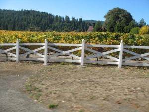 Sonoma vinyard