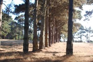 Trees outside KOA
